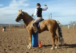 Working Equitation Group Lesson